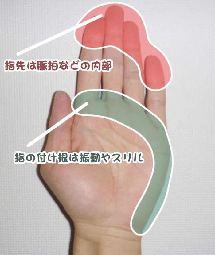 触診・指先は脈拍などの内部、指の付け根は振動やスリル